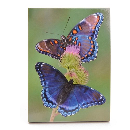 Image of   Notes bog, sommerfugl