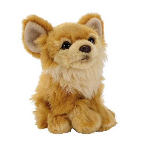 Image of   Hund bamse Chihuahua