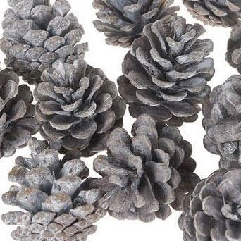 Image of   Dijk Natural Collections Blue Pine Pineapples Natural, 200gr.