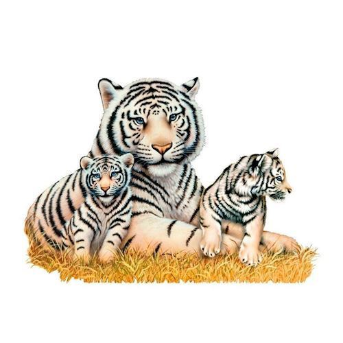 Image of   Wall sticker White Tigers