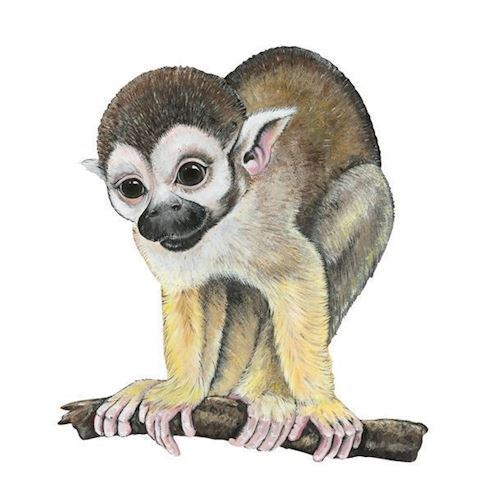 Image of   Wall sticker Monkey on branch